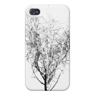 Curry Plant or Helichrysum angustifolium iPhone 4/4S Cases