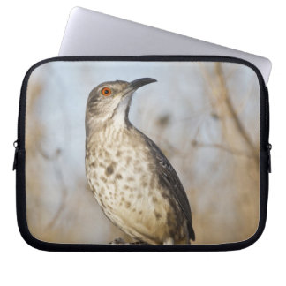 Curve-billed thrasher perched laptop sleeve