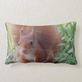 Cushion squirrel Pillow Squirrel