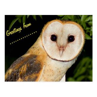Custom barn owl post card