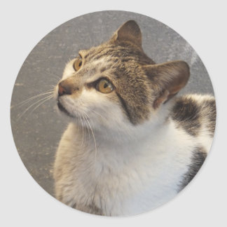 Custom Cat stickers