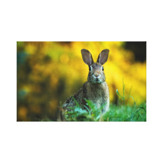 Custom Easter Rabbit Stretched Canvas Print Art
