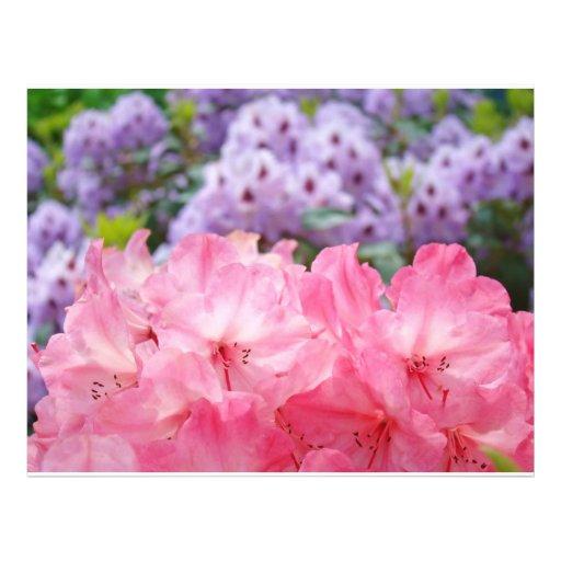 Custom Flyers create Pink Rhodies Floral Flowers