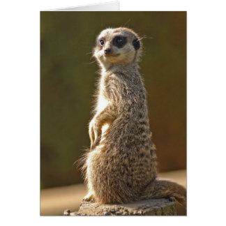 Custom Meerkat Birthday Card