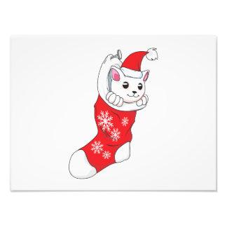 Custom Merry Christmas White Kitten Cat Red Sock Photograph