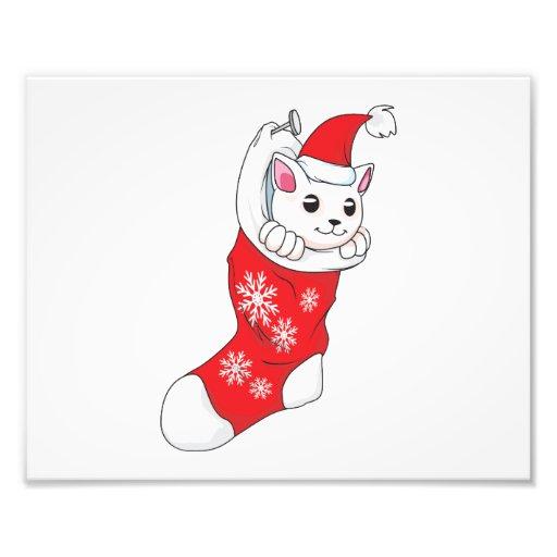 Custom Merry Christmas White Kitten Cat Red Sock Photo