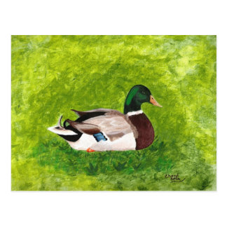 Custom Painting of Mallard Duck Postcards