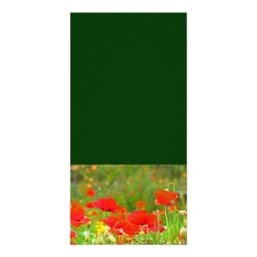 Custom Photo cards Add Your Text Poppy Flowers