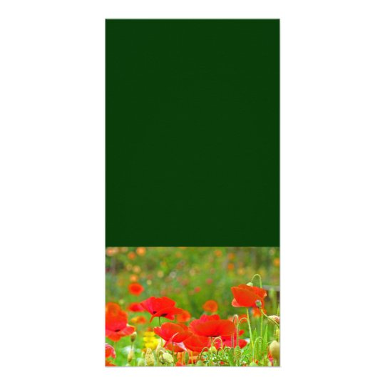 Custom Photo cards Add Your Text Poppy Flowers