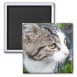 Custom photo magnet for fridge | Your image here