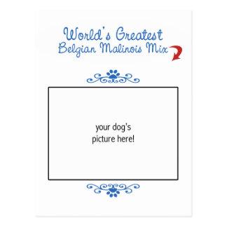 Custom Photo! Worlds Greatest Belgian Malinois Mix Postcard