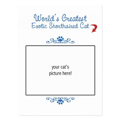 Custom Photo! Worlds Greatest Exotic Shorthair Post Card