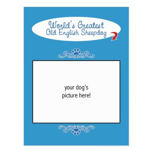Custom Photo! Worlds Greatest Old English Sheepdog Post Card