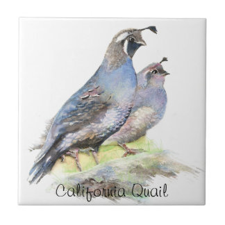 Custom Watercolor California Quail birds Tile