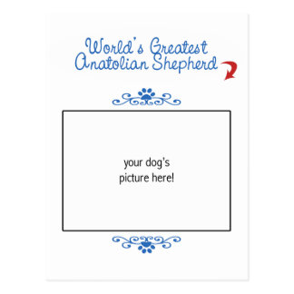 Custom Worlds Greatest Anatolian Shepherd Postcard