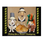 Customisable Funny Dogs Happy Thanksgiving
