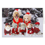 Customisable Funny Pets Christmas Card