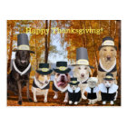Customisable Funny Pilgrim Dogs Thanksgiving Post Postcard