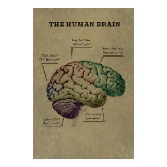 Customisable Human Brain Poster, edit the 5 labels