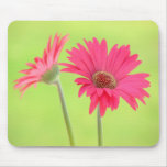 Customisable Pink Gerber Daisies on Green Mousepad