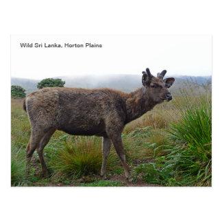 Customisable Postcard featuring a Sambar Deer