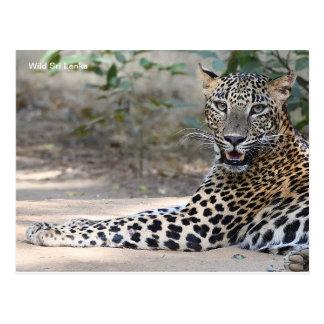 Customisable Sri Lanka Leopard Postcard
