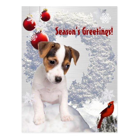 Customise It! Jack Russell Terrier Christmas Wish Postcard