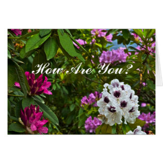 "CUSTOMIZABLE CARD, ""HOW ARE YOU?""/RHODODENDRON CARD"