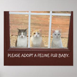 Customizable Cat Adoption Poster