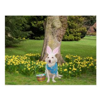Customizable Easter Egg Hunt Postcard