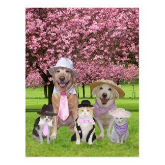Customizable Funny Pet Pink Theme Postcard