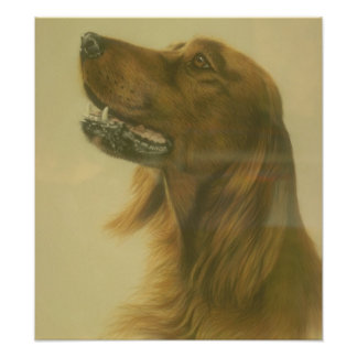 Customizable Irish Setter Art Poster Photographic Print