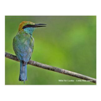 Customizable Little Bee-eater Postcard