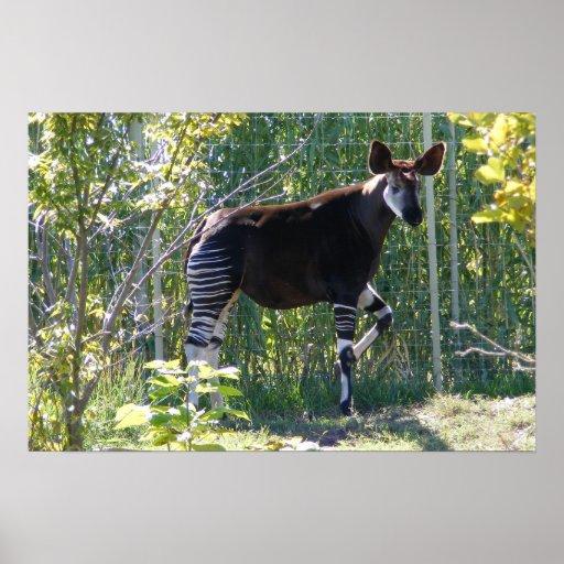 Customizable Okapi Poster
