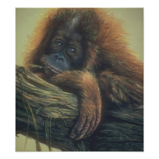 Customizable Orangutan Art Poster Art Photo