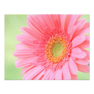 Customizable Pink Gerber Daisy Personalized Announcements