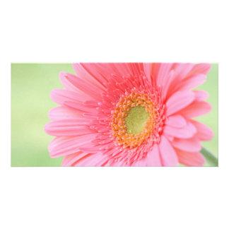 Customizable Pink Gerber Daisy Photo Cards