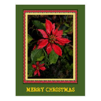 Customizable Poinsettia Christmas Post Card