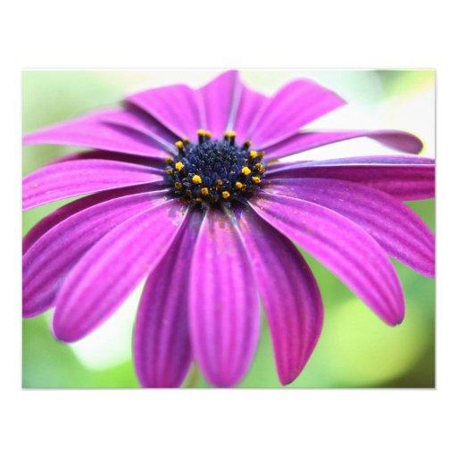 Customizable Purple Daisy Custom Invitation