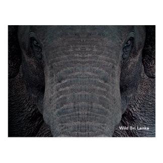 Customizable Sri Lanka Elephant Postcard