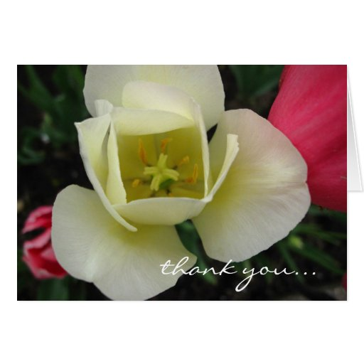 Customizable Tulip Card