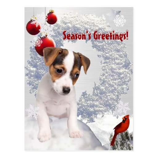 Customize It!  Jack Russell Terrier Christmas Wish Post Card