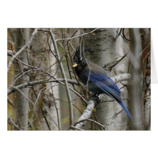Customize Steller's Jay Card
