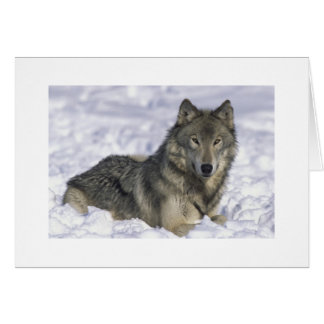 Customized Holiday Greeting Cards Snow Wolf