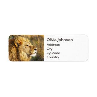 Customized Lion Wild Animal Wildlife Safari