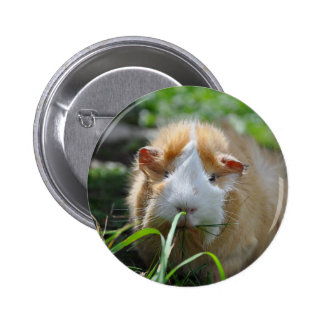 Cute, Abyssinian, Cream and White Guinea Pig Pin
