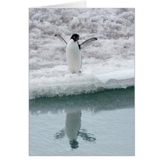 Cute Adelie Penguin Cards
