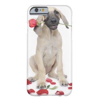cute,admiration,romance,love, barely there iPhone 6 case