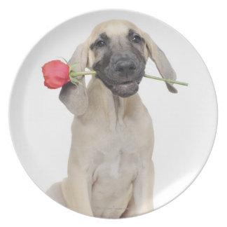 cute,admiration,romance,love, plate