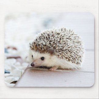 cute adorable baby hedgehog mouse pad